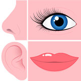Nose, eye, ear and mouth collection Stock Photo