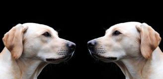Nose to nose Stock Photos