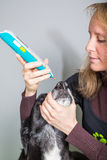 Nose. Woman treats sick dogs nose with acupuncture Stock Photos