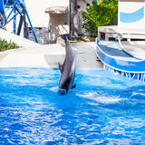 Nosedown Dolphine´s Jump Stock Photography