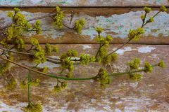 Nosegay. Early spring flowers on the old Board royalty free stock image