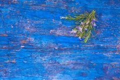 Nosegay of rosemary on blue background Royalty Free Stock Photos