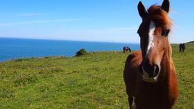Nosey horse in front of blue sea royalty free stock photo