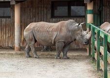noshörning royaltyfri fotografi