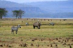 Noshörning i den Tanzania nationalparken fotografering för bildbyråer