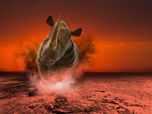 Noshörning noshörning, djurliv, laddande illustration stock illustrationer