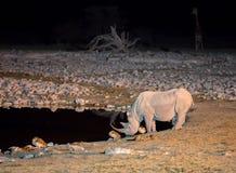 Noshörning på waterhole fotografering för bildbyråer