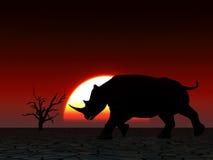 Noshörningdjurliv 23 Arkivbild