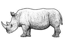 Noshörningillustration, teckning, gravyr, färgpulver, linje konst, vektor Stock Illustrationer
