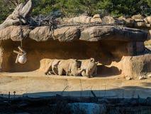 Noshörningvänner under vaggar på en solig dag royaltyfri foto