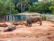 Noshörning i zoo Arkivbilder