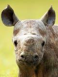 nosorożec obraz stock