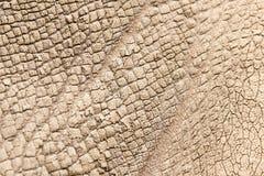Nosorożec skóra jako tło obrazy stock