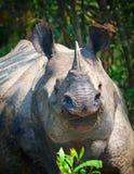 Nosorożec w dżungli zdjęcia royalty free