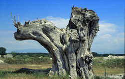 nosorożec drzewo Obrazy Royalty Free