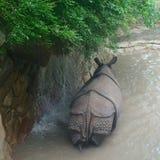 Nosorożec przy zoo Obrazy Stock