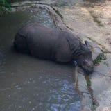 Nosorożec przy zoo Zdjęcia Royalty Free