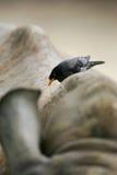 nosorożec afrykańska white Fotografia Stock
