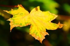 Nostalgia del otoño Imágenes de archivo libres de regalías