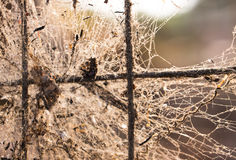 Nostalgia spider web on the net blurry focus. Spider web with death  bugs on nostalgia atmosphere blurry focus Royalty Free Stock Photography