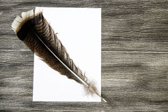 The nostalgic bird feather pen and paper. Nostalgic pens, write letters, calligraphy pens, pens for birds, write white pages and letters Royalty Free Stock Photos