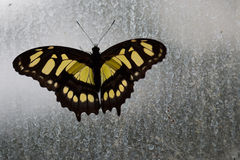 Nostalgic Butterfly Royalty Free Stock Images