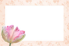 Free Nostalgic Floral Frame With Beautiful Tulip Flower Tricolor Royalty Free Stock Images - 40422929