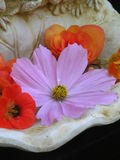 Nostalgic, romantic still life. Photograph of some flowers in a small basin Royalty Free Stock Image