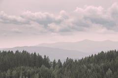 Nostalgiczny las, jodła modrzewie, sosny Zdjęcia Royalty Free