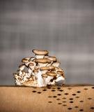 Nostrano dei funghi prataioli del fungo nostrani Immagine Stock