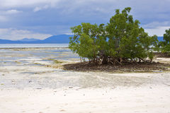Free Nosy Be Sand Lagoon Stock Images - 33310104