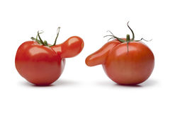 Nosy tomatoes Royalty Free Stock Images