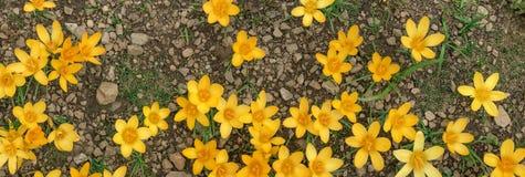 notícias da mola; primeiras flores da mola Imagem de Stock Royalty Free