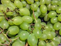 Not all vines bear fruit for vinification: even table grapes are very popular. One grape leads to another, you know! A thin but cr. Ispy skin, a juicy and sugary stock image