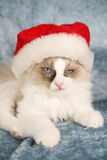 Not amused. Cute little ragdoll kitten looking not amused with wearing a santa hat stock photography
