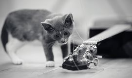 Not the color image of a gray curious kitten and the guitar. Lying on a floor stock photography