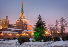 Not dressed Christmas tree. Near the Kremlin wall Royalty Free Stock Photos