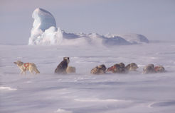 Not far from the North Pole stock photography