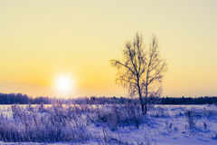 Not frozen pond in winter Royalty Free Stock Photo