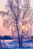Not frozen pond in winter Stock Image