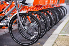 Not like all the other gray bicycle among orange Stock Photos
