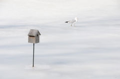 Not my home. A seagull on a frozen pond checks out an improbable bird house Royalty Free Stock Photo