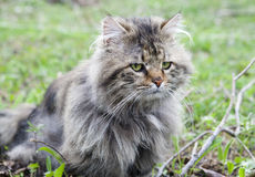 Not purebred cat outdoors Stock Photo