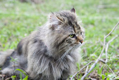 Not purebred cat outdoors Royalty Free Stock Images