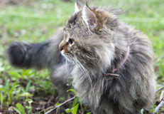 Not purebred cat outdoors Stock Photos