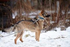 Not purebred dog. Stock Photo