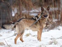 Not purebred dog. Royalty Free Stock Image