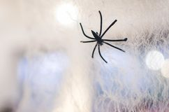 Not a real spider on the web stock images