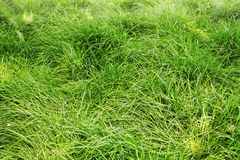 Not sheared lawn Royalty Free Stock Images