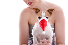 Not so sure I like christmas. Small Jack Russel terrier with a christmas hat over it's snout Stock Photos